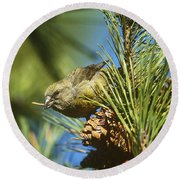 Red Crossbill Eating Cone Seeds Round Beach Towel