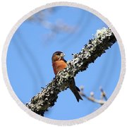 Red Crossbill Finch Round Beach Towel