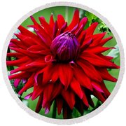 Round Beach Towel featuring the photograph Red Dahlia by Donna Walsh