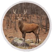 Red Deer Round Beach Towel by Eunice Gibb