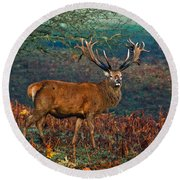 Red Deer Stag In Woodland Round Beach Towel by Scott Carruthers