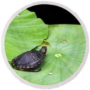 Red-eared Slider Round Beach Towel by Greg Reed