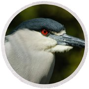 Round Beach Towel featuring the photograph Red Eye - Black-crowned Night Heron Portrait by Georgia Mizuleva