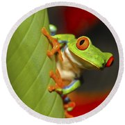 Red Eyed Leaf Frog Round Beach Towel