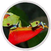 Red Eyed Tree Frogs Round Beach Towel