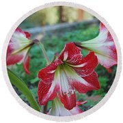 Red Flower 1 Round Beach Towel by George Katechis