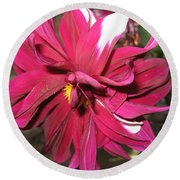 Red Flower In Bloom Round Beach Towel