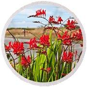 Red Flowers Crocosmia Lucifer Montbretia Plant Art Prints Round Beach Towel