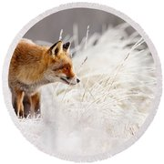 Red Fox And Hoar Frost _ The Catcher In The Rime Round Beach Towel