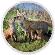 Red Fox Family Round Beach Towel