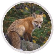 Round Beach Towel featuring the photograph Red Fox by James Peterson