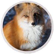 Red Fox Standing Round Beach Towel