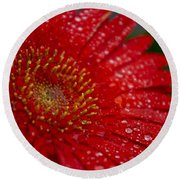 Red Gerber In The Rain Round Beach Towel
