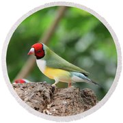 Red Headed Gouldian Finch Round Beach Towel