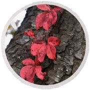 Red Leaves On Bark Round Beach Towel