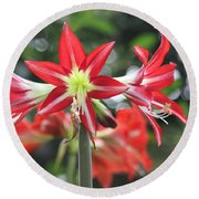 Round Beach Towel featuring the photograph Red Amaryllis by The Art of Alice Terrill