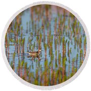 Red-necked Phalarope Phalaropus Round Beach Towel