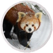 Red Panda In The Snow Round Beach Towel