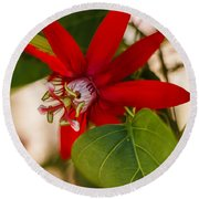 Round Beach Towel featuring the photograph Red Passion Flower by Jane Luxton
