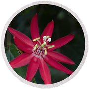 Red Passion Flower Round Beach Towel