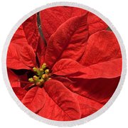 Red Poinsettia Plant For Christmas Round Beach Towel by Jane McIlroy