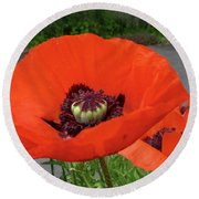Round Beach Towel featuring the photograph Red Poppy by Barbara Griffin