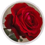 Red Rose Round Beach Towel by Jane Luxton