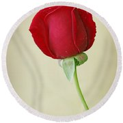 Red Rose On White Round Beach Towel by Sandy Keeton