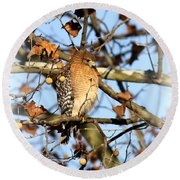 Red-shouldered Hawk - Img_7943 Round Beach Towel