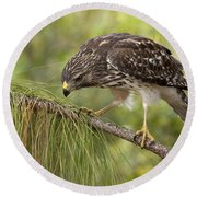 Red Shouldered Hawk Photo Round Beach Towel