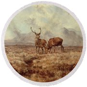 Red Stags, Ben Buie Round Beach Towel
