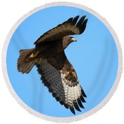 Red-tail Flight Round Beach Towel by Mike Dawson