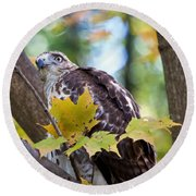 Red Tail Hawk Closeup Round Beach Towel by Eleanor Abramson