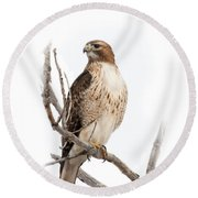Red Tail Hawk Round Beach Towel