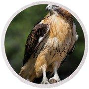 Red Tail Hawk Portrait Round Beach Towel