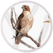 Red Tail Hawk Series Round Beach Towel