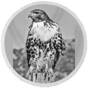 Red Tail Hawk Youth Black And White Round Beach Towel