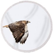Red Tail In Flight Round Beach Towel