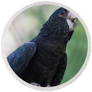 Red-tailed Black Cockatoo Round Beach Towel by Bianca Nadeau