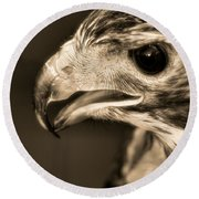Red Tailed Hawk Round Beach Towel by Dan Sproul