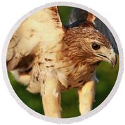Red Tailed Hawk Hunting Round Beach Towel by Dan Sproul