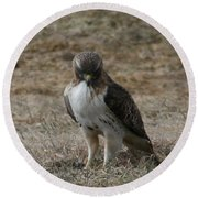 Round Beach Towel featuring the photograph Red Tailed Hawk by Neal Eslinger