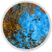 Red-tailed Hawk Round Beach Towel by Sandi OReilly