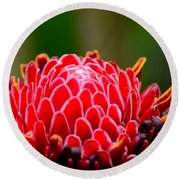 Red Torch Ginger Flower Head From Tropics Singapore Round Beach Towel