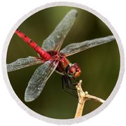 Red-veined Darter  - My Joystick Round Beach Towel