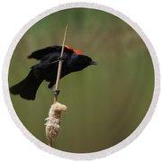 Red Winged Blackbird 3 Round Beach Towel