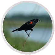 Round Beach Towel featuring the photograph Red-winged Blackbird Landscape by James Peterson