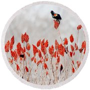 Red Winged Blackbird On Sumac Round Beach Towel
