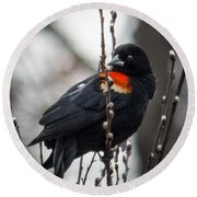 Round Beach Towel featuring the photograph Red Winged Blackbird In Pussy Willows by Patti Deters