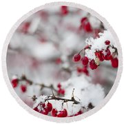 Red Winter Berries Under Snow Round Beach Towel